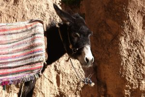 Donkey in the Todra Gorges