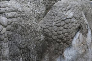 Font rock scales